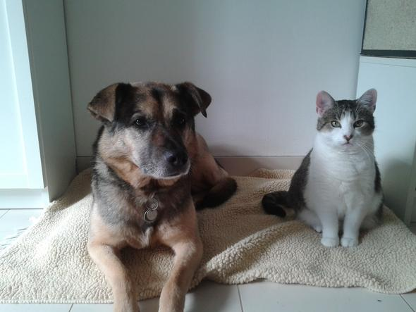anderer Hund und Katzt