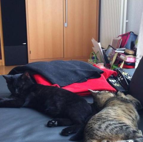 Das sind sie die zwei kleinen pupsis!❤️ (links: Blacky / rechts: Tigles)
