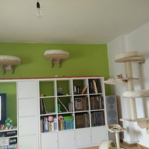 Mein Hängekratzbaum und 'Catwalk'. Kratzbaum: 170€, Wandliegebretter: ca. 110€.