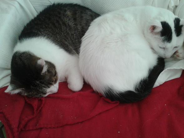 junge Katzen und Wohnungskatzen niemals einzeln halten!
