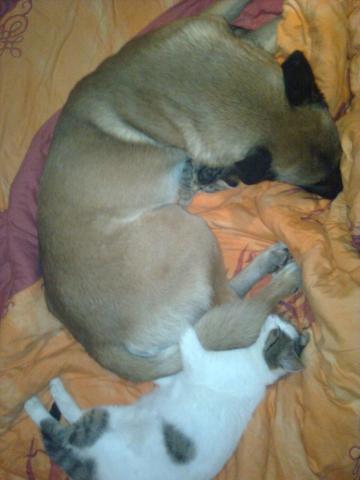 rüde mit zwei katzen