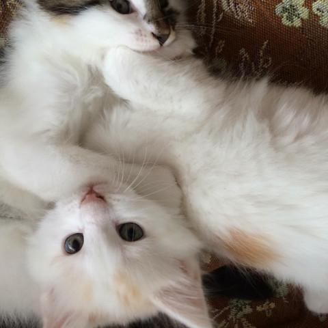 So sieht die Katze aus :D