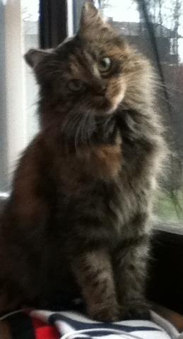 unsere Kätzin namens Mila