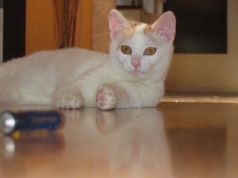 Mein Kater Snowball