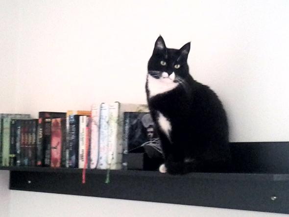 Er ist kurz davor, mein Bücherregal auszuräumen ...