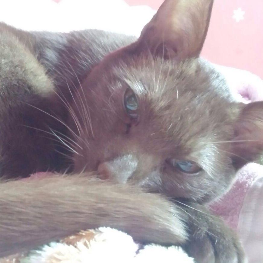 Katzenallergie, was kann man noch tun außer
