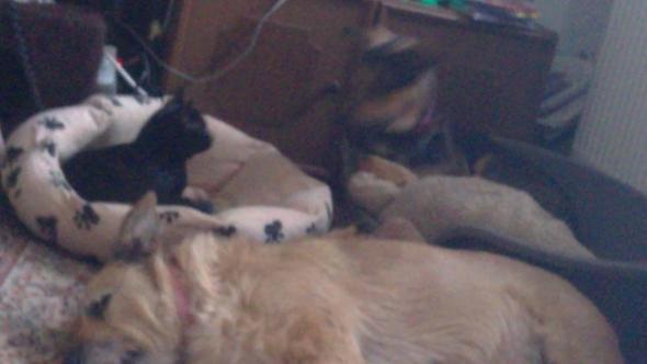 Meine zwei Hunde und Blacky ihr Stiev Kind
