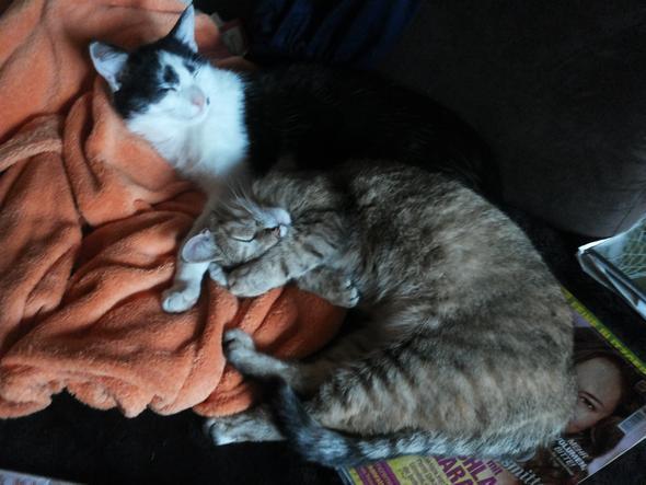 Achim (schwarz/weiß leider verstorben) und Luna 2 Jahre alt