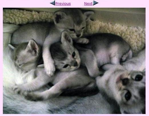 graue katzenbabys